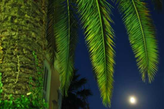 dalla palma alla luna - Bordighera (2430 clic)