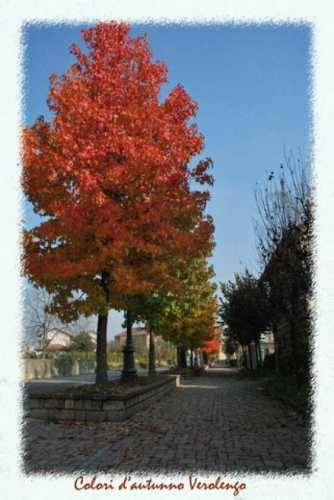 colori d'autunno - Verolengo (1728 clic)