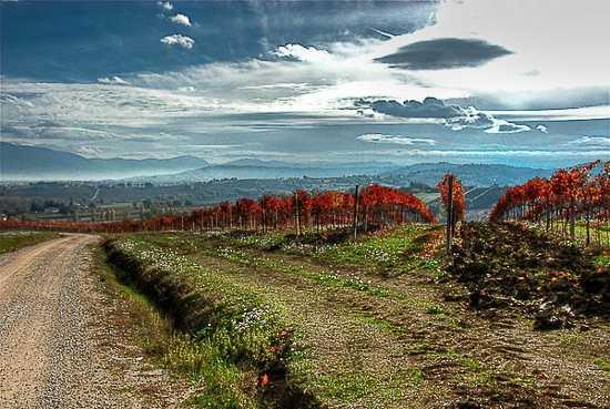 Colline sovrastanti  - Cannara (2765 clic)