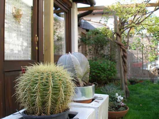 giardino B&B Dimora Montegnacco - Udine (2073 clic)