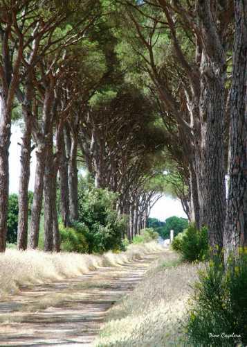 fraganite - Maglie (2255 clic)