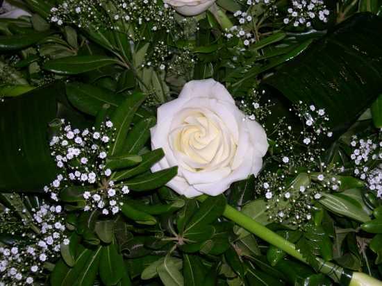 fiori - Ribera (2575 clic)