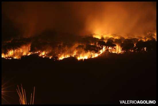 Incendio Doloso - Bologna (3332 clic)