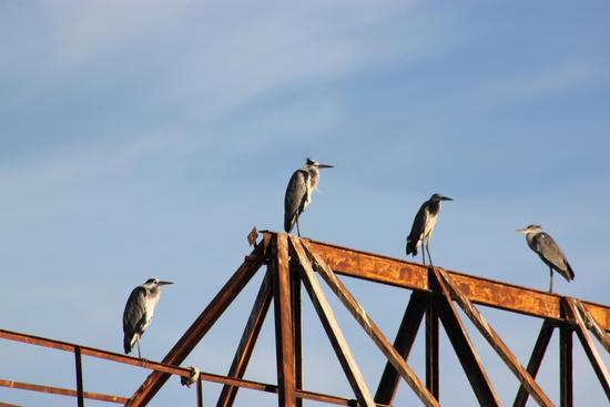Uccelli sul ponte  (343 clic)