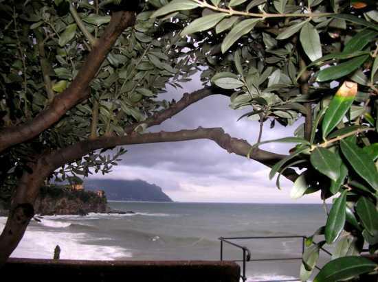 Punta chiappa e promontorio di Portofino - Sori (3605 clic)