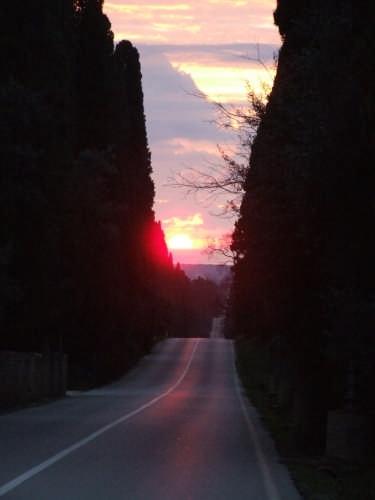 viale dei cipressi - Bolgheri (7836 clic)