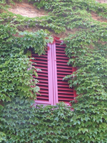 finestra rossa  nel verde - Certaldo (2373 clic)