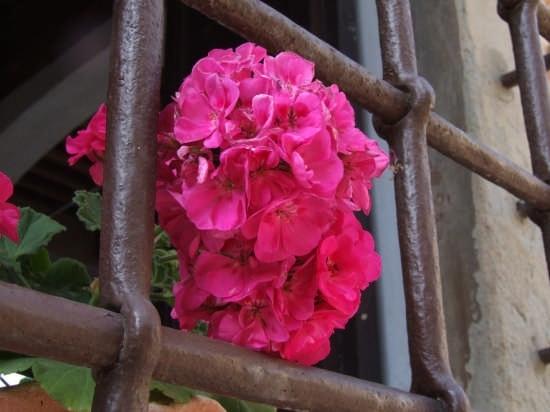 finestra con fiore - Certaldo (2229 clic)