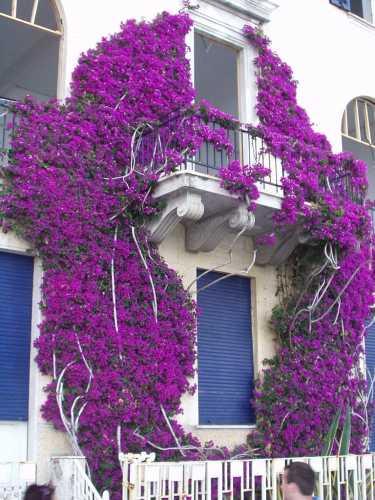 finestra in fiore - Monterosso al mare (3292 clic)