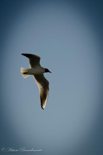 ...la libertà... - Ortona (2270 clic)