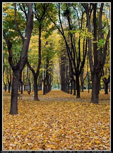 Yellow - Monza (2374 clic)
