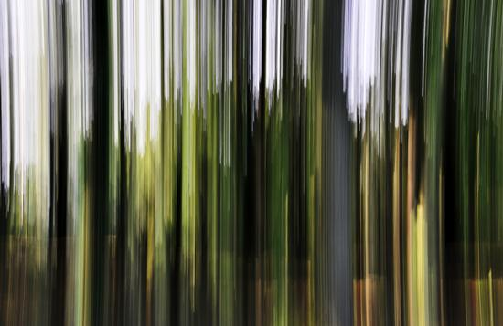 trees - Ricengo (579 clic)