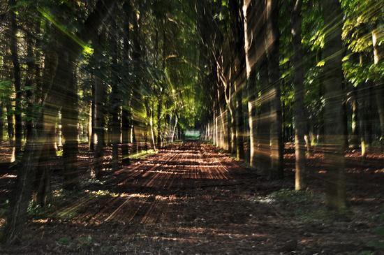 trees - Ricengo (418 clic)