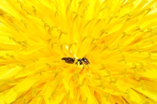 into a flower. - Crema (381 clic)