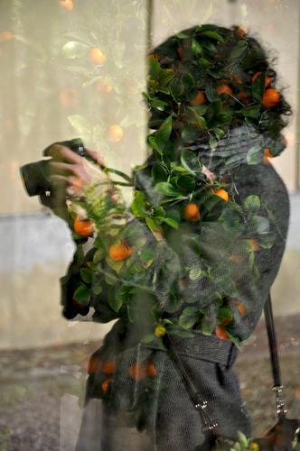 Vi e le arance - Firenze (517 clic)