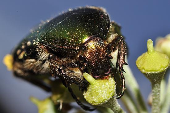 eating a flower - Crema (446 clic)