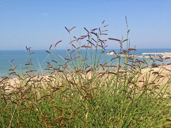 Punta Penna - Vasto (959 clic)