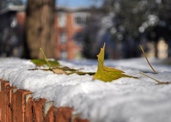 inverno - Crema (1133 clic)