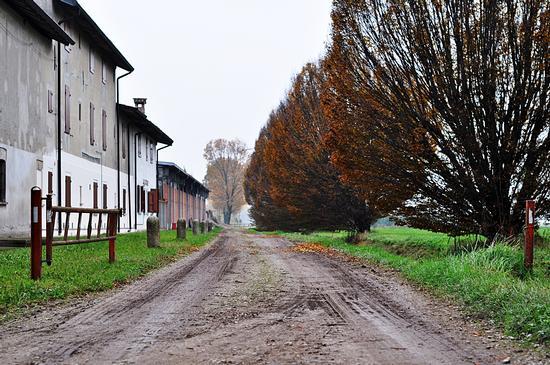 autumn. - Crema (299 clic)