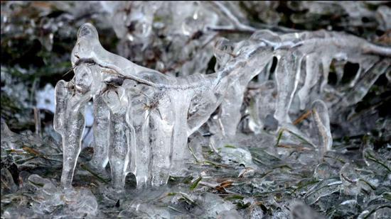 Natura ghiacciata (337 clic)