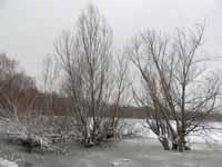 Il Parco del Conca ghiacciato - San giovanni in marignano (1099 clic)
