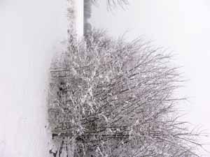 La campagna raffreddata - San giovanni in marignano (1065 clic)