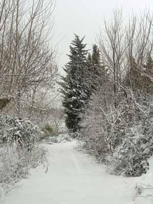 Sentiero - San giovanni in marignano (1059 clic)