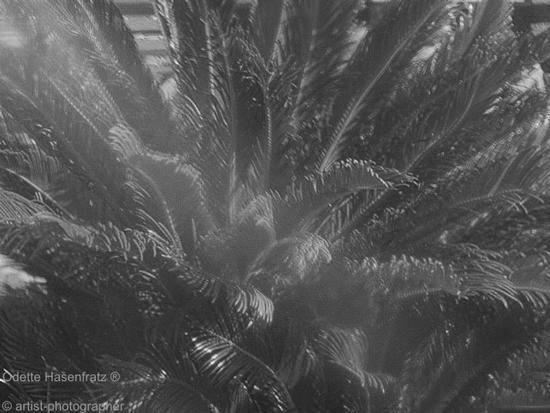 vegetazione di Segesta (2619 clic)
