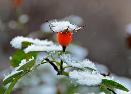 Una nota di colore per chi in questi giorni ha sofferto e gioito sotto la neve - Pomezia (2262 clic)
