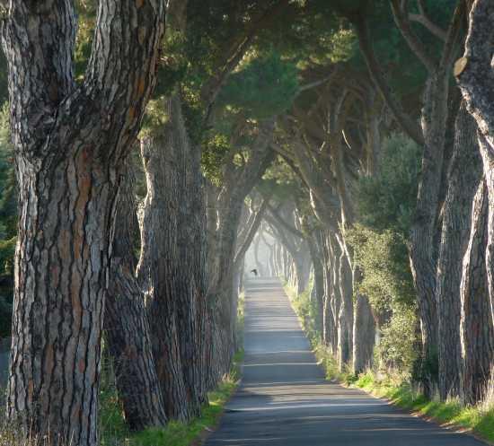 Belvedere in strada - Pomezia (3551 clic)