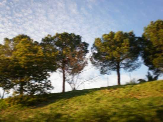 poesia della natura - Messina (2762 clic)