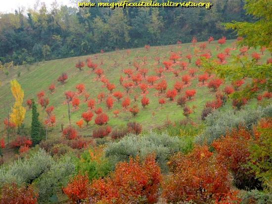I colori dell'autunno nella campagna Cesenate (2576 clic)