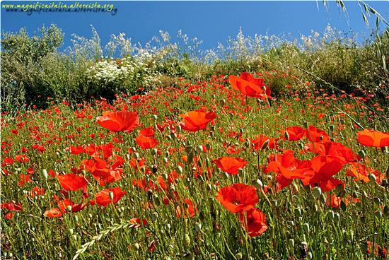 Primavera, tripudio di colori - Monticchiello (2313 clic)