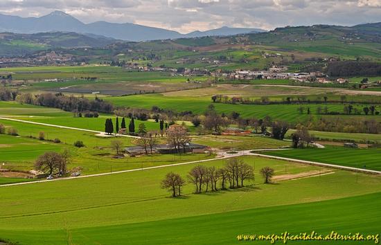 Bella campagna marchigiana - Corinaldo (2367 clic)