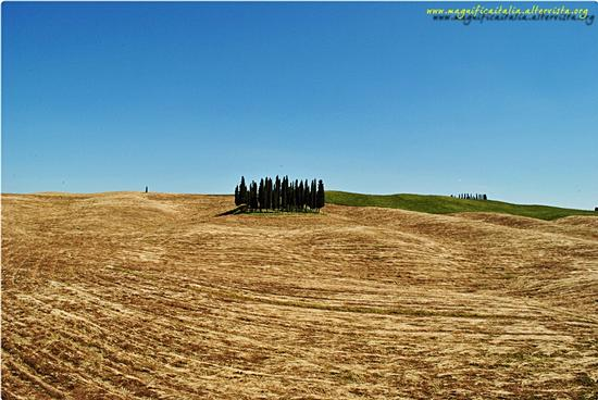 Cypress hill, in localita' Torrenieri - Montalcino (3750 clic)