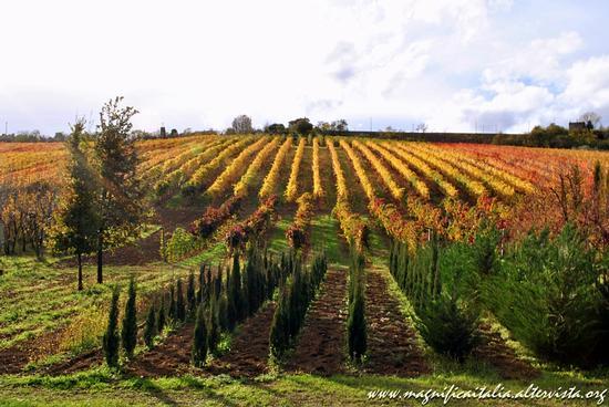 Caldi colori autunnali - Bertinoro (3178 clic)