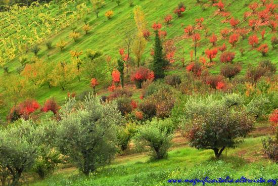 Contrasto di colori autunnali - Cesena (3797 clic)