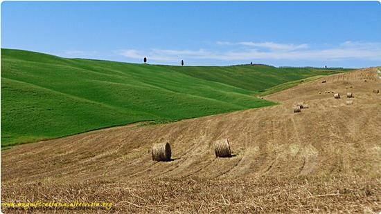 Campagna Senese, armonia e colori - Montalcino (3631 clic)