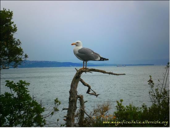 La...sentinella del golfo - Trieste (3288 clic)