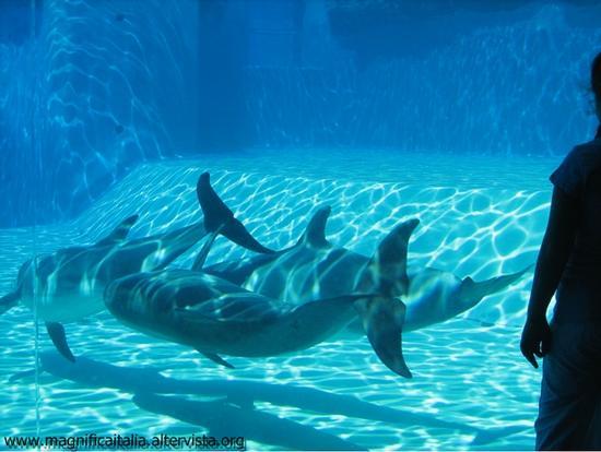 Il parco acquatico - Riccione (3128 clic)