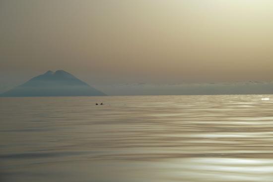 Delfini, tra Salina e Stromboli (3763 clic)