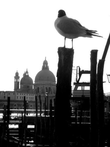 Un gabbiano a Venezia - VENEZIA - inserita il 09-Jun-07