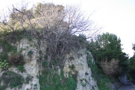 paesaggio - Casabona (1970 clic)