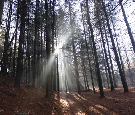 Foschia al parco naturale dei Lagoni di Mercurago, Piemonte gennaio 2012 (2702 clic)