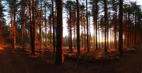 Tramonto in pineta, Parco naturale dei Lagoni di Mercurago, Arona 29 febbraio 2012 (1875 clic)
