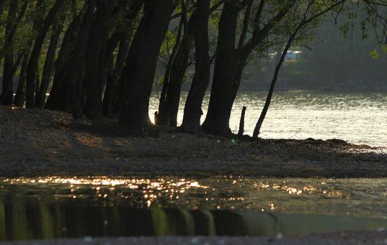 Foce del vevera, Arona, Lago Maggiore (Verbano), Piemonte aprile 2011 (2204 clic)