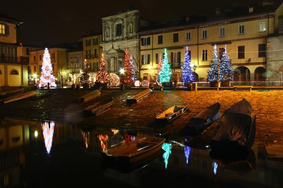Abeti in piazza del Popolo, Arona dicembre 2013 (1079 clic)