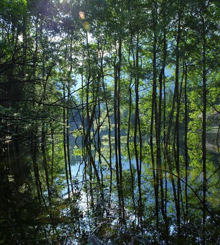 Riflessi nel laghetto di Antillone 2, val Antigorio, val d'Ossola giugno 2012 - Premia (1581 clic)