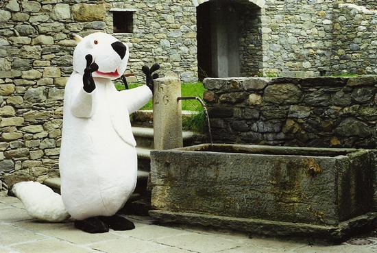 Marmotta bianca, mascotte di  - La salle (2850 clic)