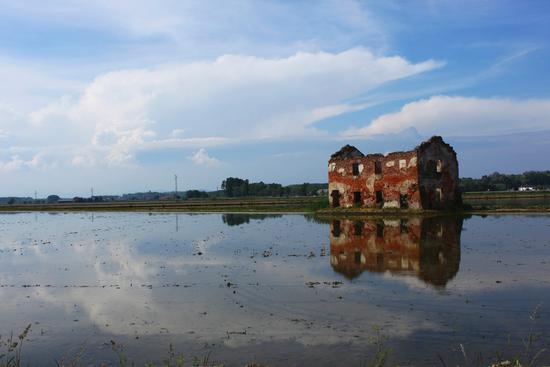Riflessi nelle risaie, Castellazzo Novarese, Piemonte aprile 2011 (2818 clic)